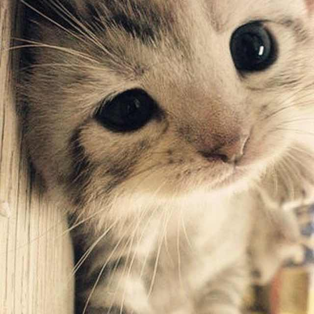 【猫薄荷1】的个人主页 -(穿衣助手,让你更懂搭配)